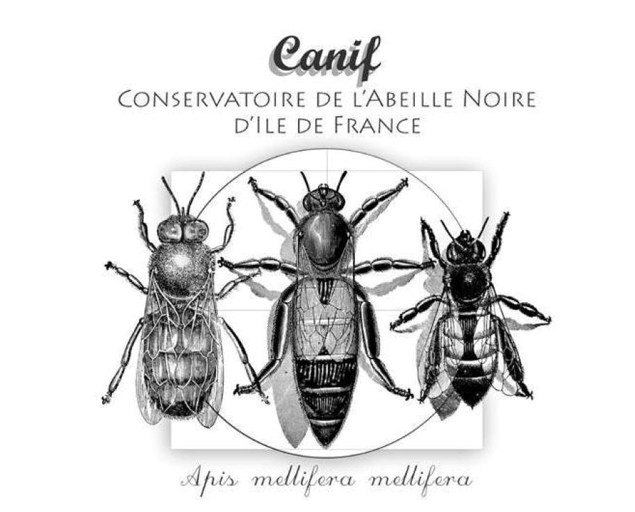 CANIF