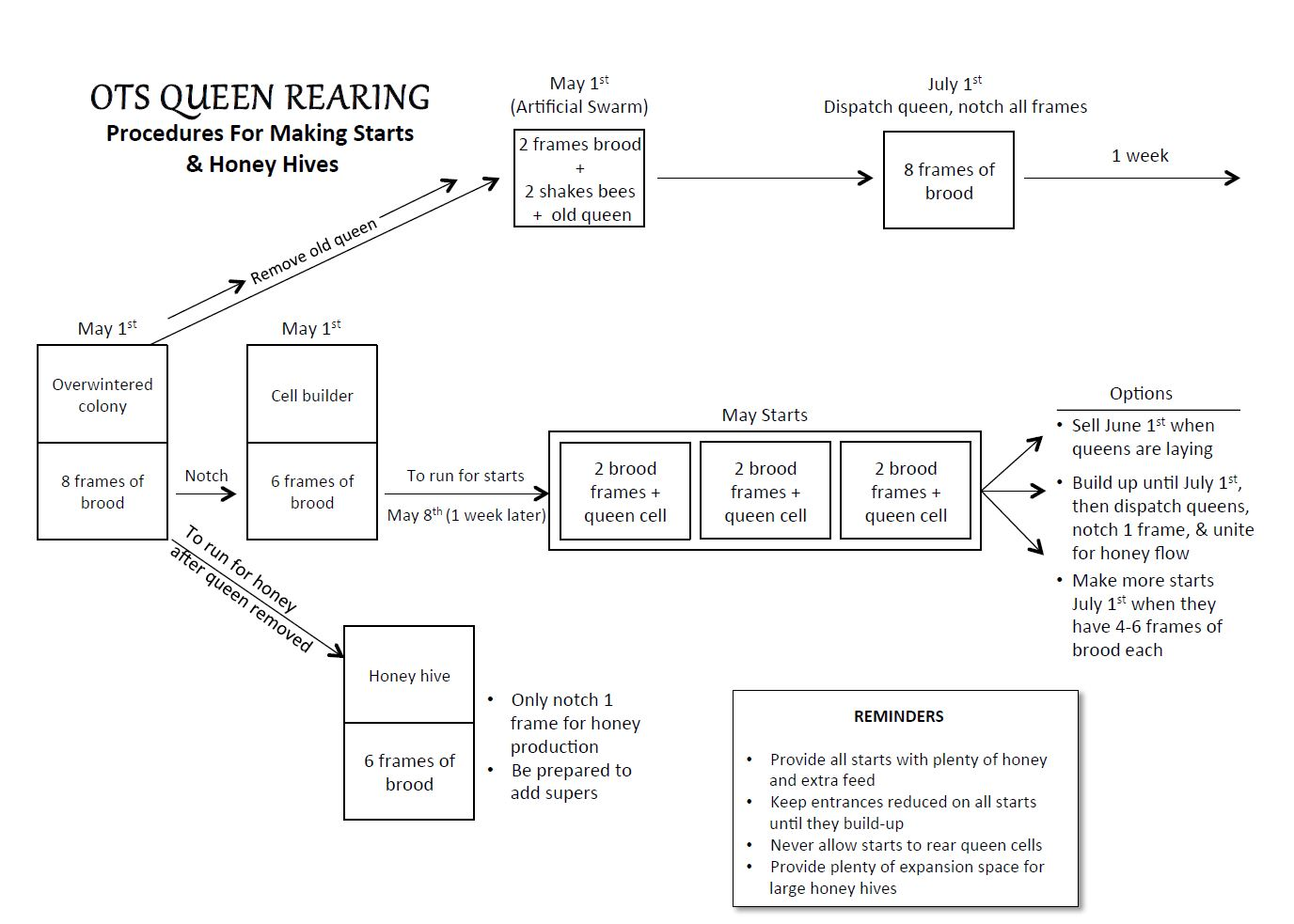 OTS - Élevage de reine sur place